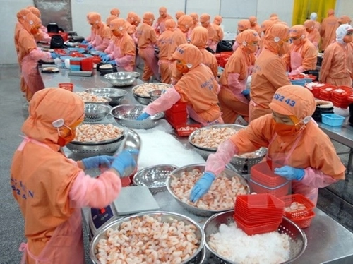 Vietnam slams Australias prawn ban