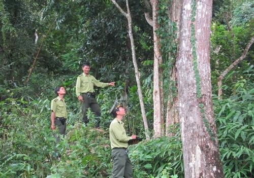 Premier okays target program on sustainable forest development
