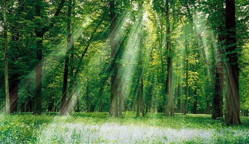 Scheme on sustainable forest management approved