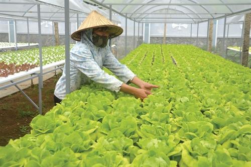 Food enterprises get a legal boost