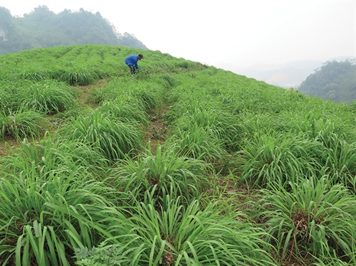 Lao Cai province: a frontier agriculture attraction for foreign investment