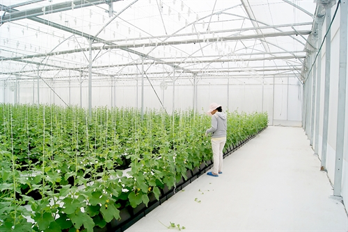 Criteria for recognizing hi-tech agricultural projects laid out