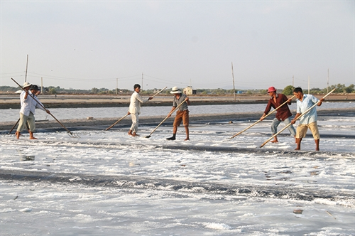 Scheme to improve salt productivity nodded