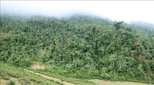 Forestry to become modern economic-technical sector